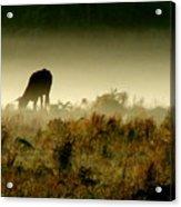 Grazing On A Misty Morning Acrylic Print by Kimberly Camacho