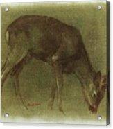 Grazing Roe Deer Oil Painting Acrylic Print