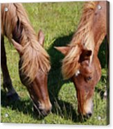 Grazing Together Acrylic Print
