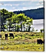 Grazing With A View Acrylic Print