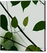 Green Leaves 2 Acrylic Print