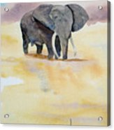 Great African Elephant  Acrylic Print