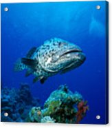 Great Barrier Reef Acrylic Print by Peter Stone - Printscapes
