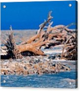 Great Blue Driftwood Acrylic Print