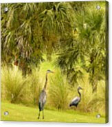 Great Blue Golfing Acrylic Print