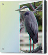 Great Blue Heron - Red-cyan 3d Glasses Required Acrylic Print