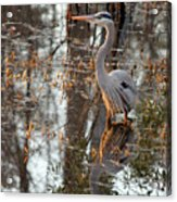Great Blue Heron And Reflection Acrylic Print