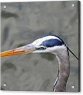 Great Blue Heron At  Morikami Gardens  Acrylic Print