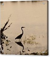 Great Blue Heron At Rollins Acrylic Print