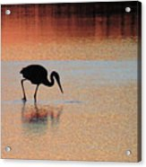 Great Blue Heron At Sunset Acrylic Print