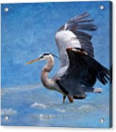 Great Blue Heron  Acrylic Print by Betty LaRue