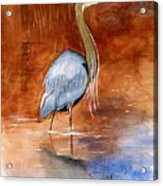 Great Blue Heron Acrylic Print