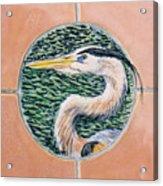Great Blue Heron Acrylic Print by Dy Witt