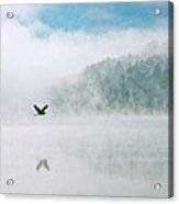 Great Blue Heron Flight Over Foggy Lake Acrylic Print