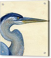Great Blue Heron Portrait Acrylic Print