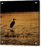 Great Blue Heron Silohuette Acrylic Print