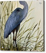 Great Blue Heron Splendor Acrylic Print by James Williamson