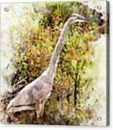 Great Blue Heron W C Acrylic Print