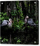 Great Blue Standoff In Watercolor Acrylic Print