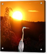 Great Blue Sunset Acrylic Print