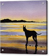 Great Dane At Sunset Acrylic Print