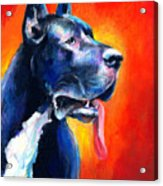 Great Dane Dog Portrait Acrylic Print