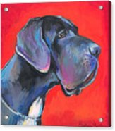 Great Dane Painting Acrylic Print