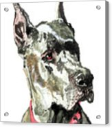 Great Dane Watercolor Acrylic Print