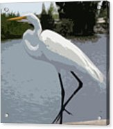 Great Egret    Ardea Alba Acrylic Print