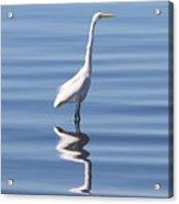 Great Egret - 2  Acrylic Print