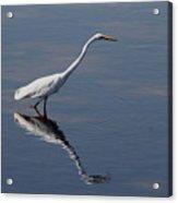 Great Egret Acrylic Print by April Wietrecki Green