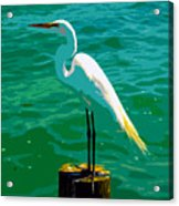 Great Egret Emerald Sea Acrylic Print