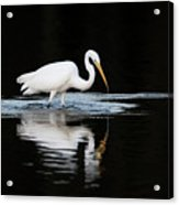 Great Egret Fishing In Early Morning Acrylic Print