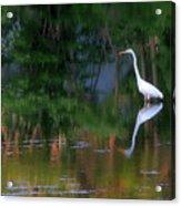 Great Egret Summer Pond Acrylic Print