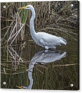 Great Egret With Reflection Acrylic Print