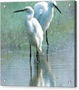 Great Egrets Acrylic Print by Betty LaRue