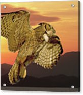 Great Horned Owl At Sunrise Acrylic Print