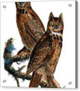Great Horned Owl Audubon Birds Of America 1st Edition 1840 Royal Octavo Plate 39 Acrylic Print
