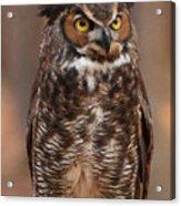 Great Horned Owl Digital Oil Acrylic Print