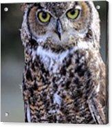 Great Horned Owl IIi Acrylic Print