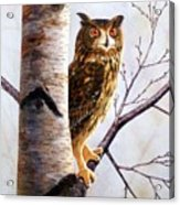 Great Horned Owl In Birch Acrylic Print