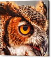 Great Horned Owl Acrylic Print