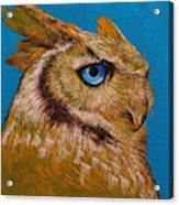 Gold Owl Acrylic Print