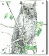 Great Horned Owl Perched In A Tree Acrylic Print