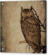 Great Horned Owl With Textures Acrylic Print