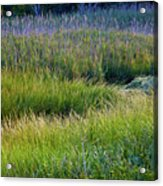 Great Marsh Grass Acrylic Print