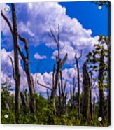 Great Meadow Acrylic Print
