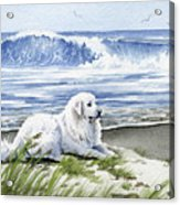 Great Pyrenees At The Beach Acrylic Print