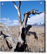 Great Sand Dunes National Park Fallen Tree Portrait Acrylic Print