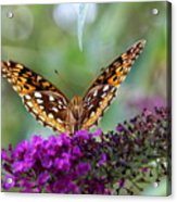 Great Spangled Fritillary Butterfly Acrylic Print